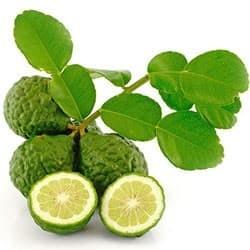 Lima-de-Caffir (Citrus hystrix)