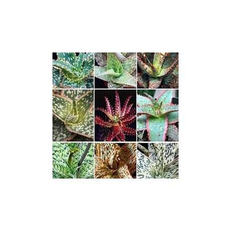 Mix - Aloe