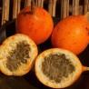 Maracujá-doce (Passiflora ligularis)