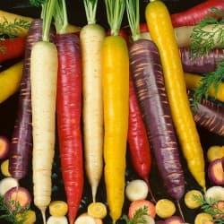 MIX - Cenouras Coloridas