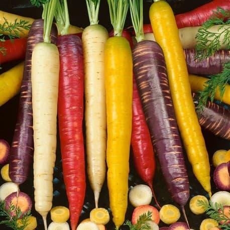 MIX - Cenouras Coloridas (Daucus carota)