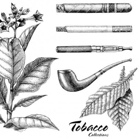 """Coleção """"Sementes de Tabaco"""""""